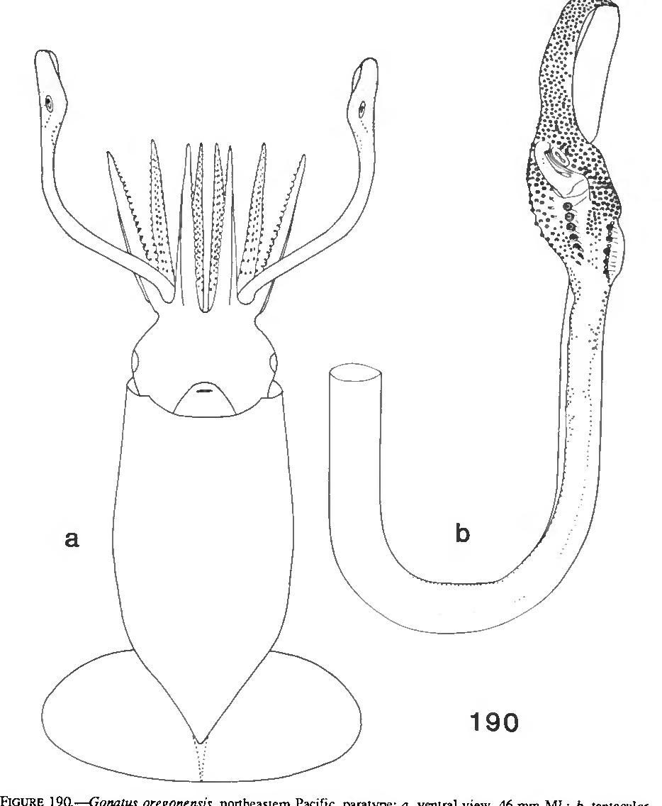 figure 190