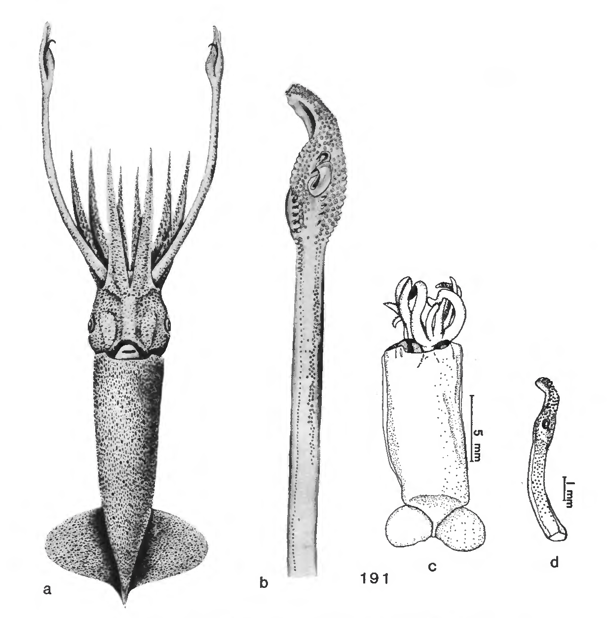 figure 191