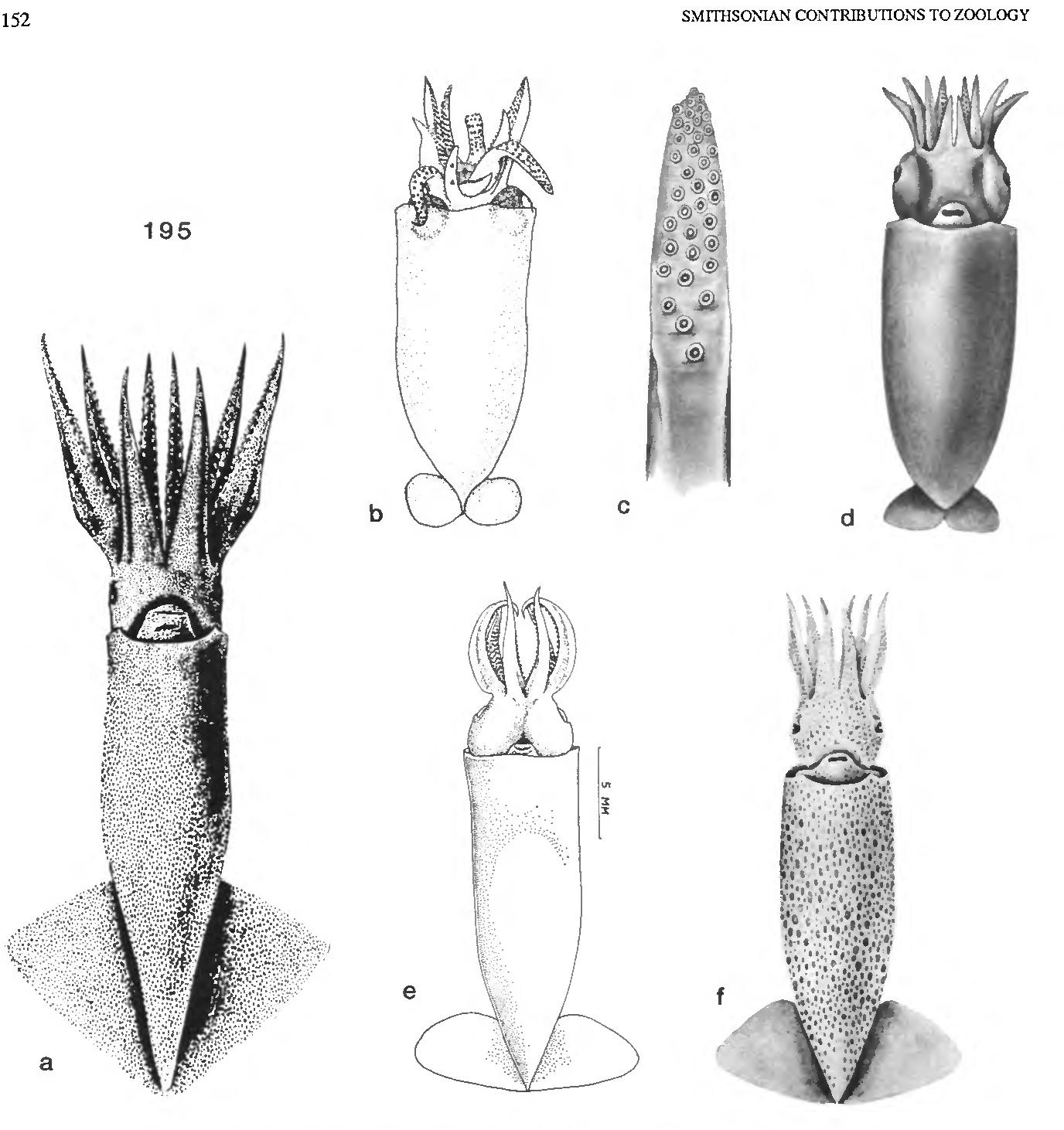 figure 195