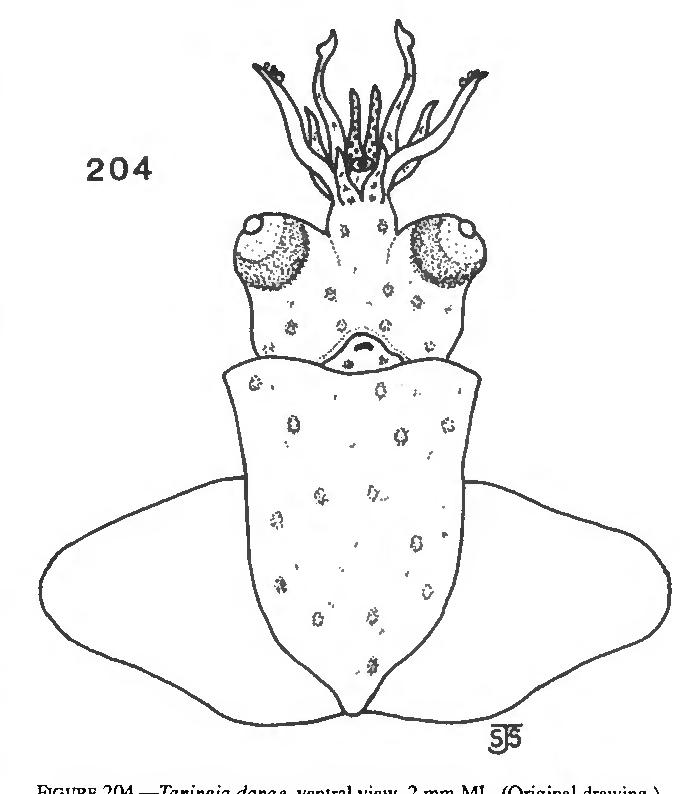 figure 204