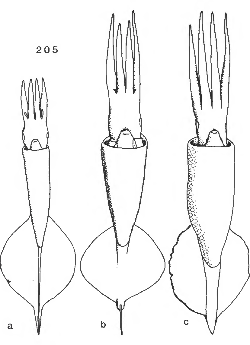 figure 205