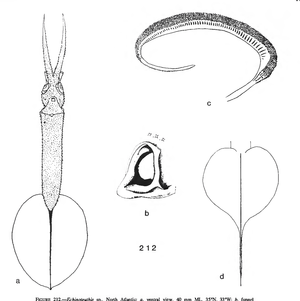 figure 212