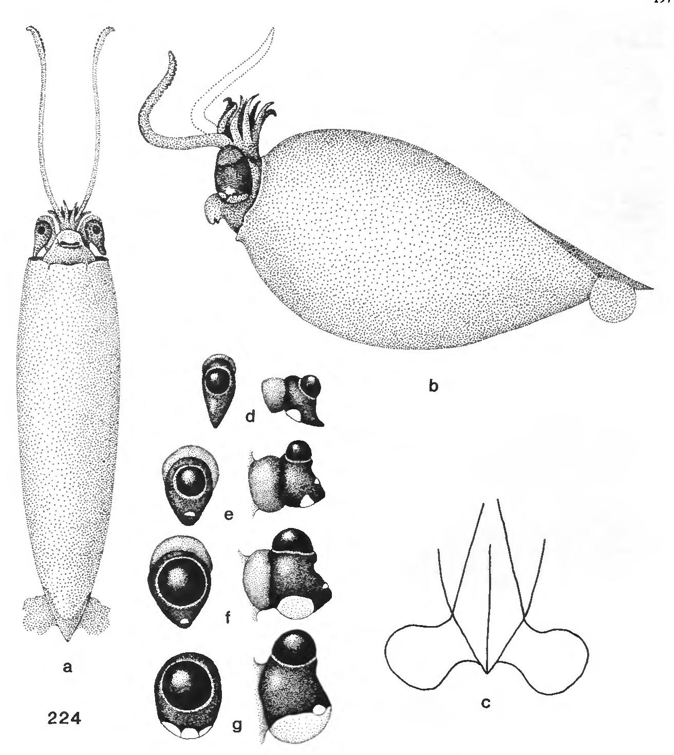 figure 224