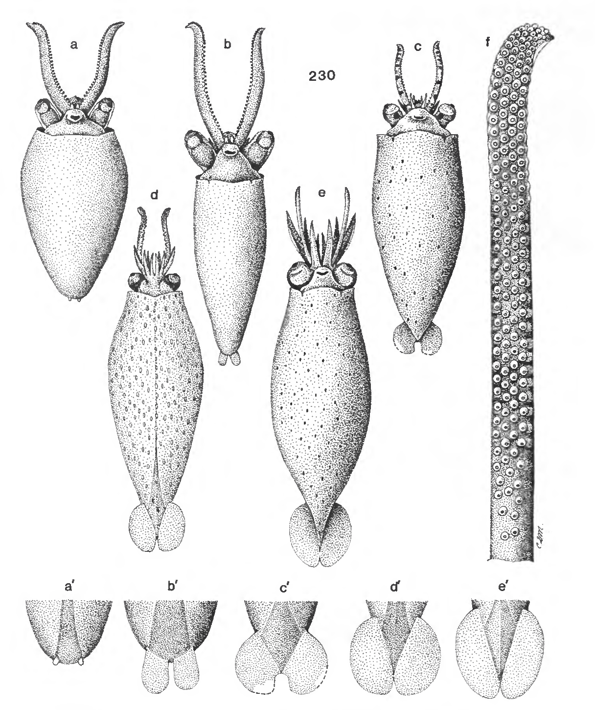 figure 230