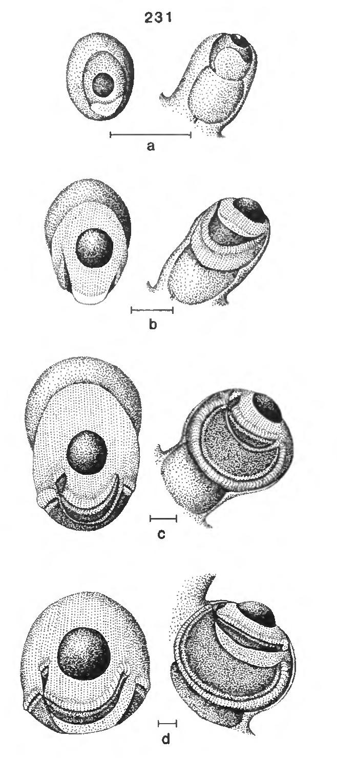figure 231
