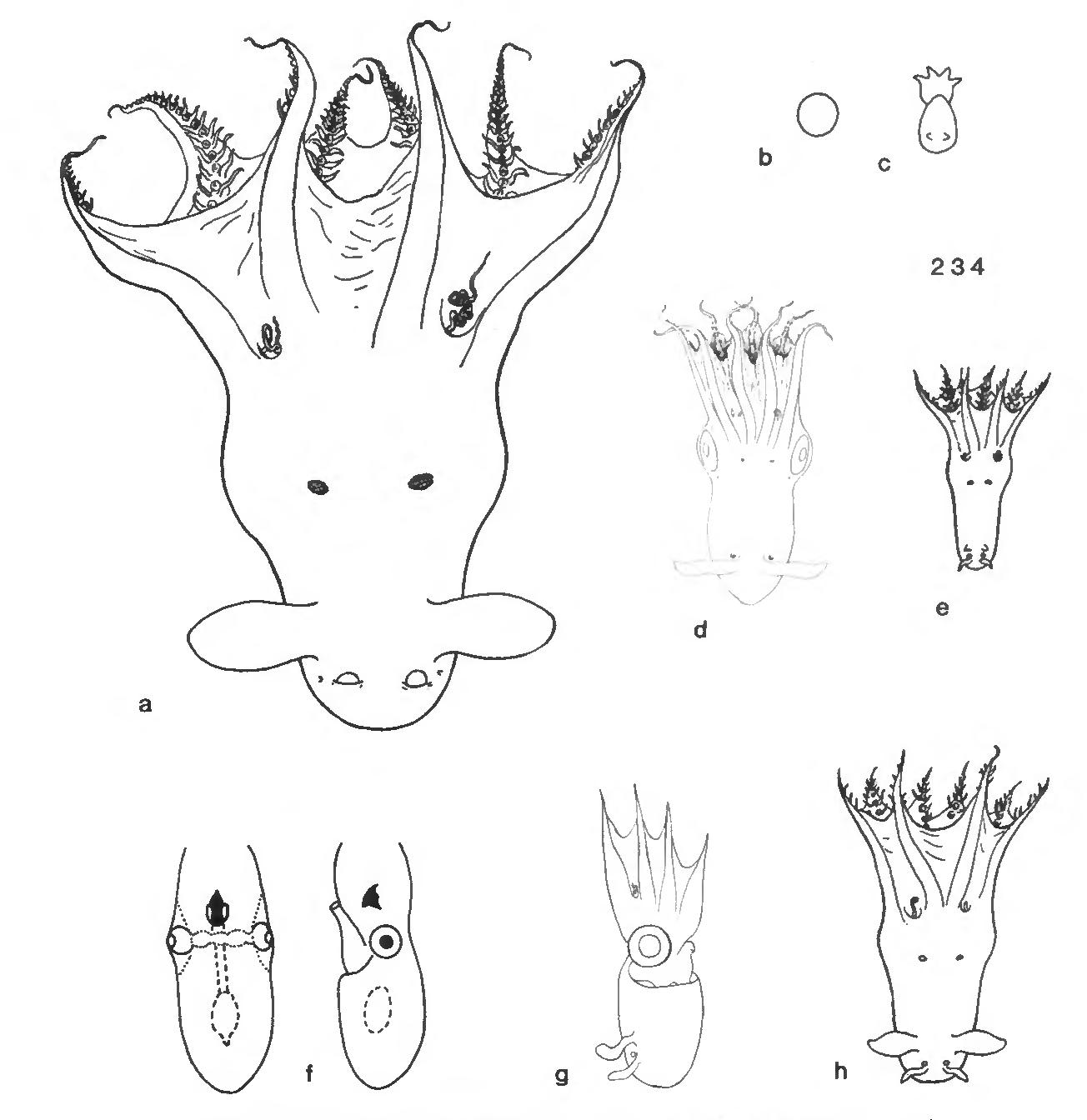 figure 234