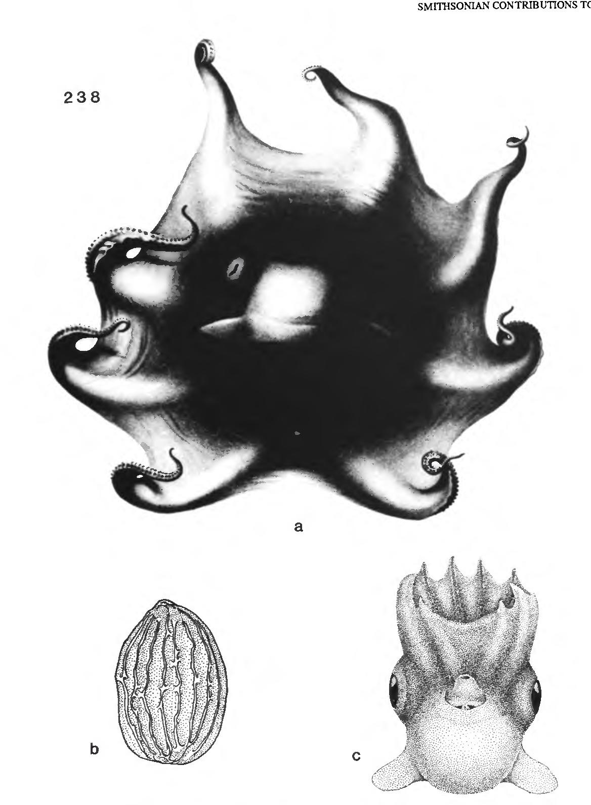 figure 238