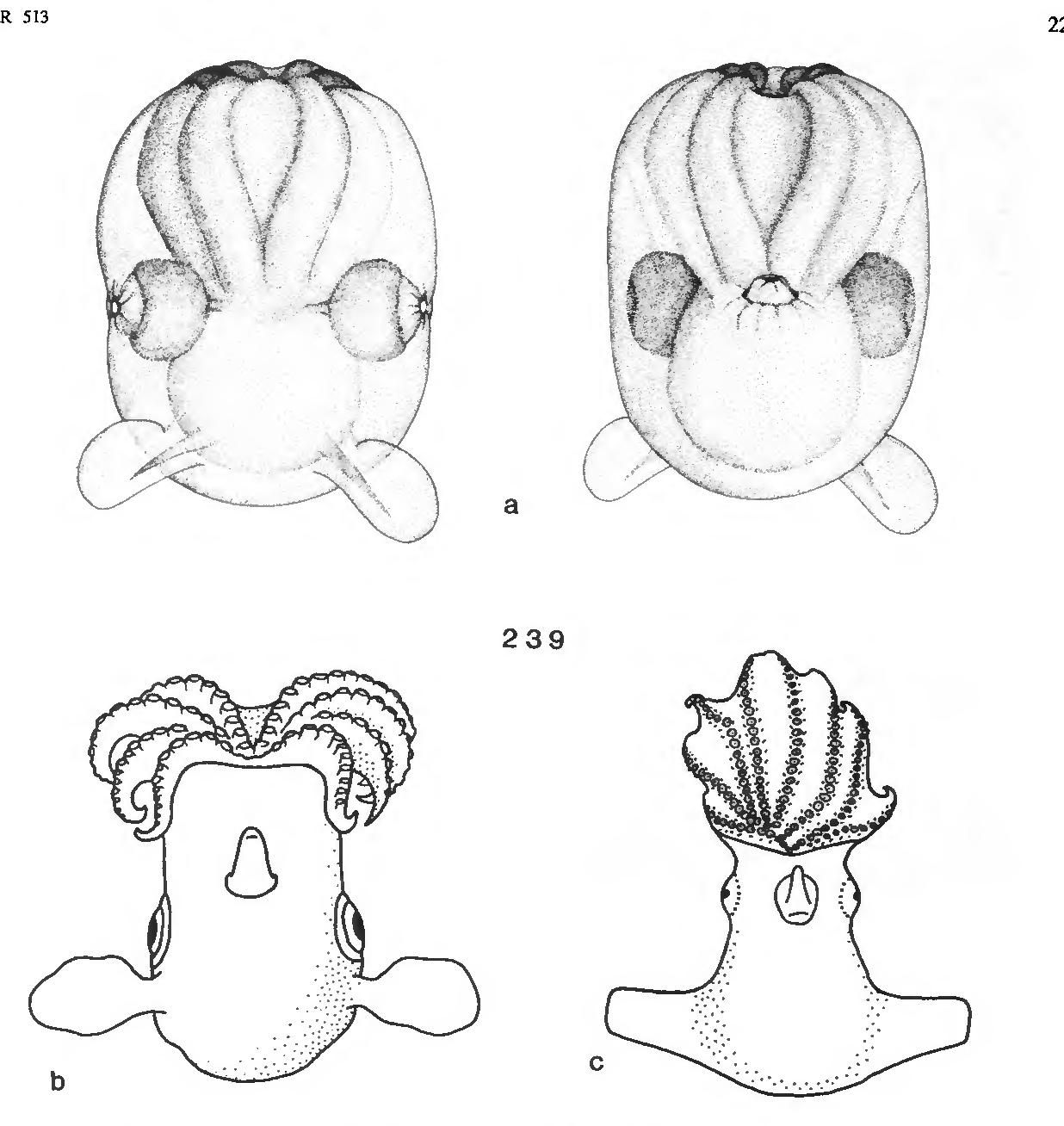 figure 239