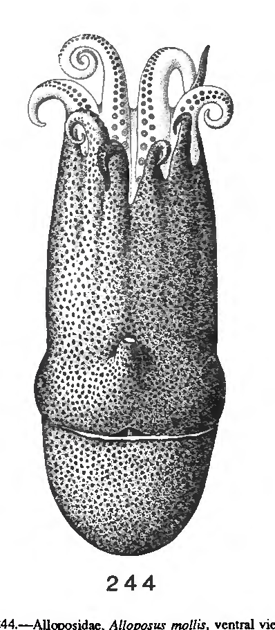 figure 244