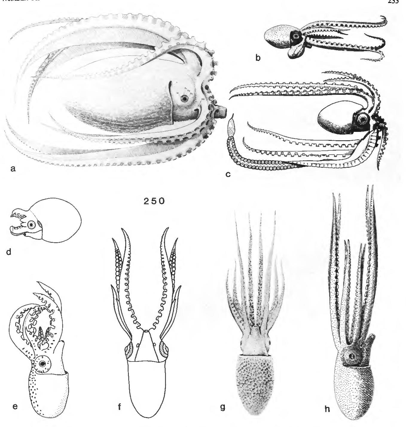 figure 250