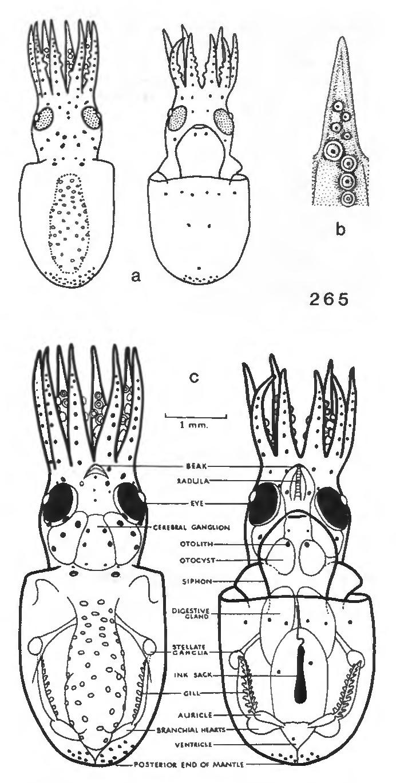 figure 265