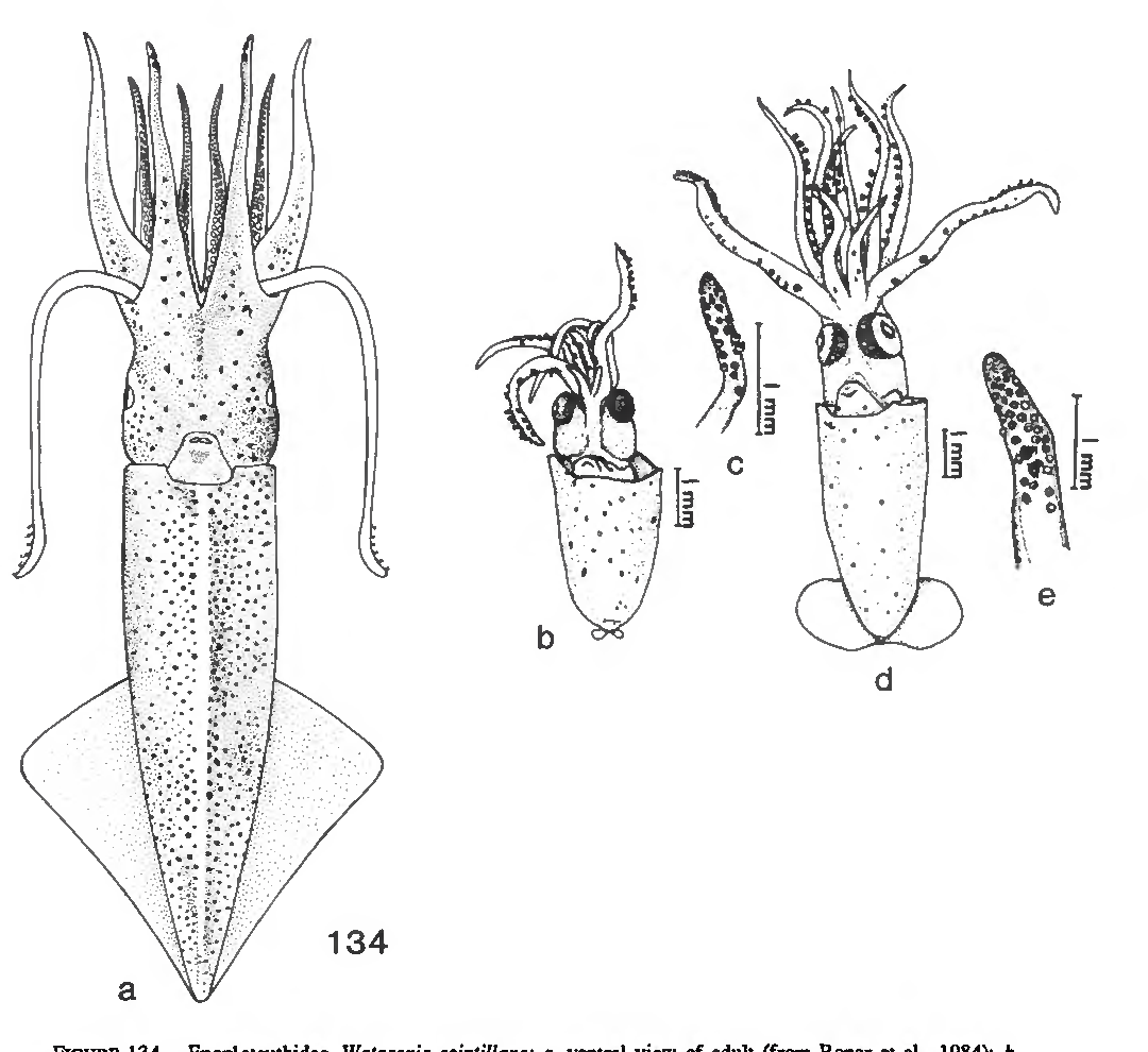 figure 134