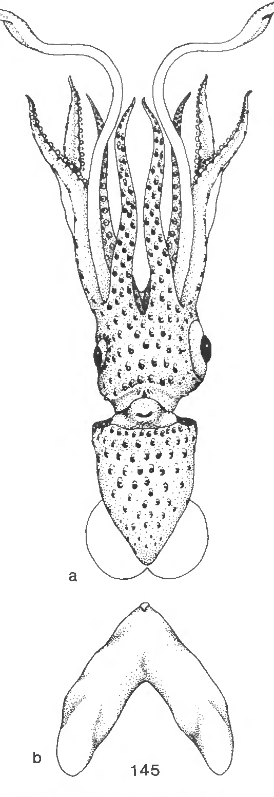 figure 145