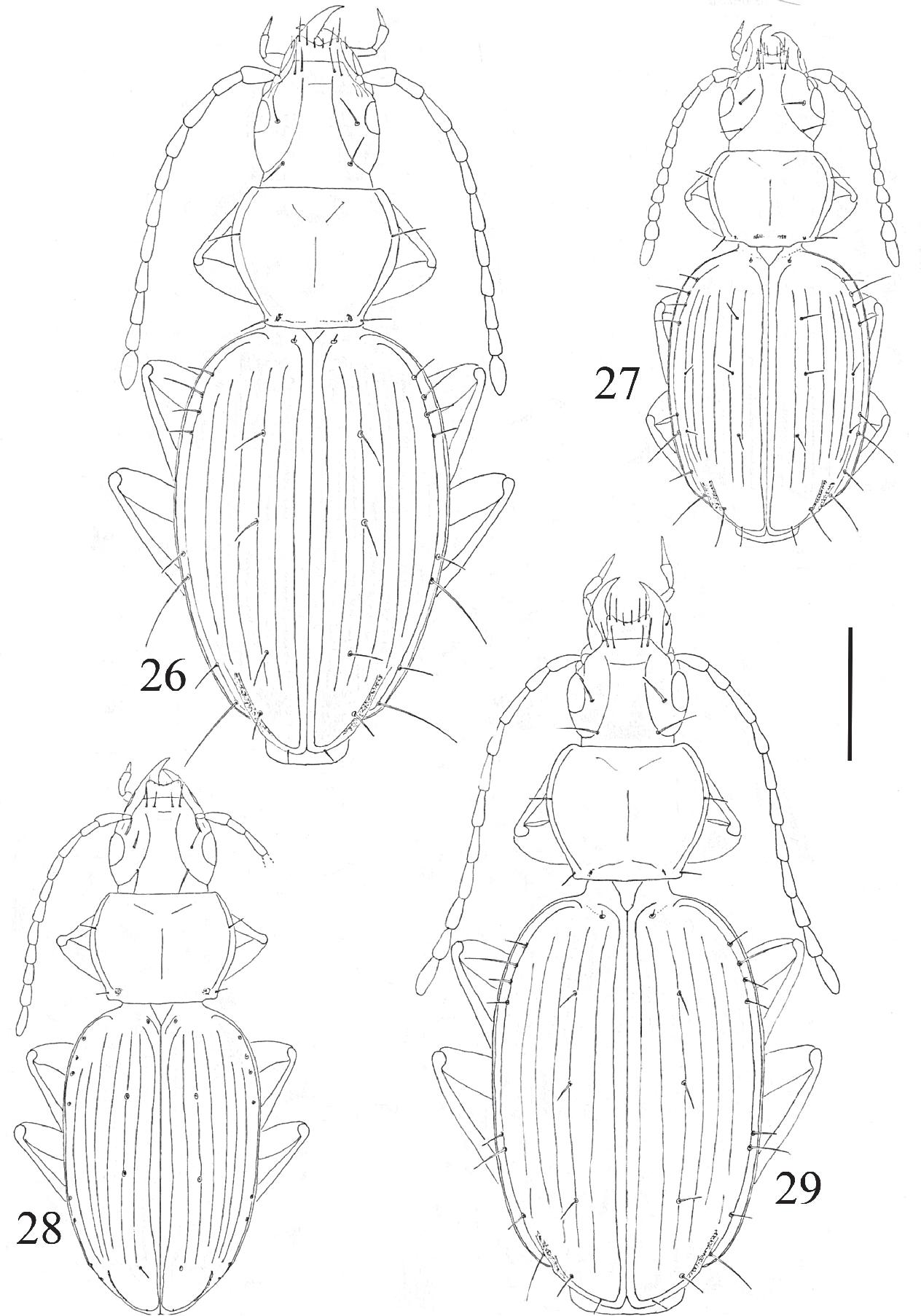 figure 26-29