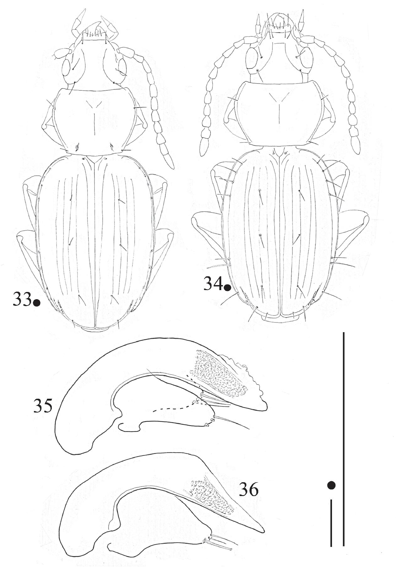 figure 33-36