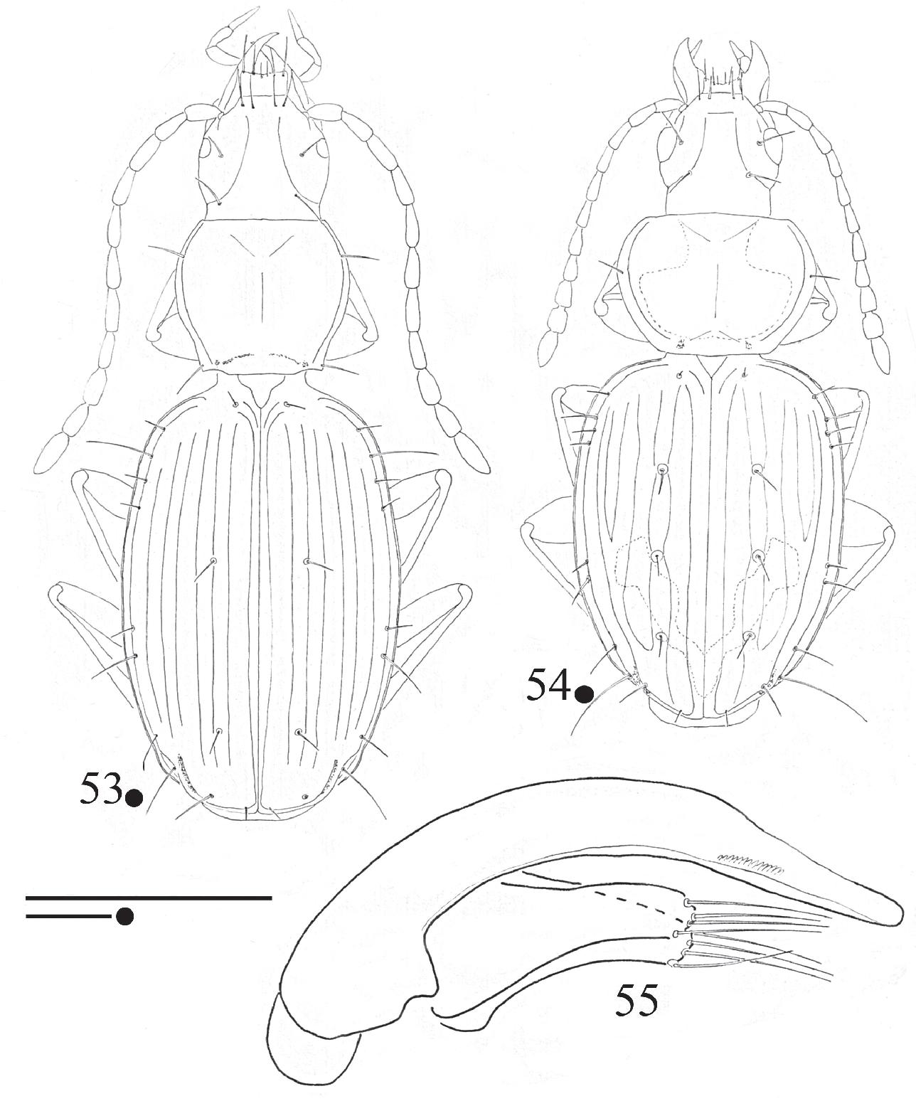 figure 53-55