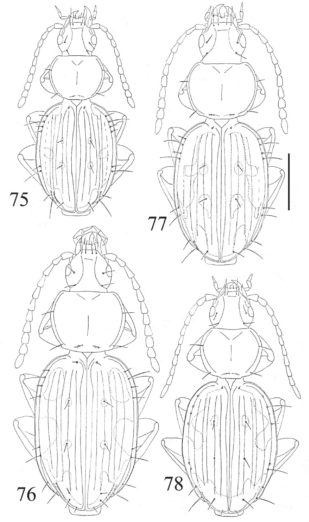 figure 75-78