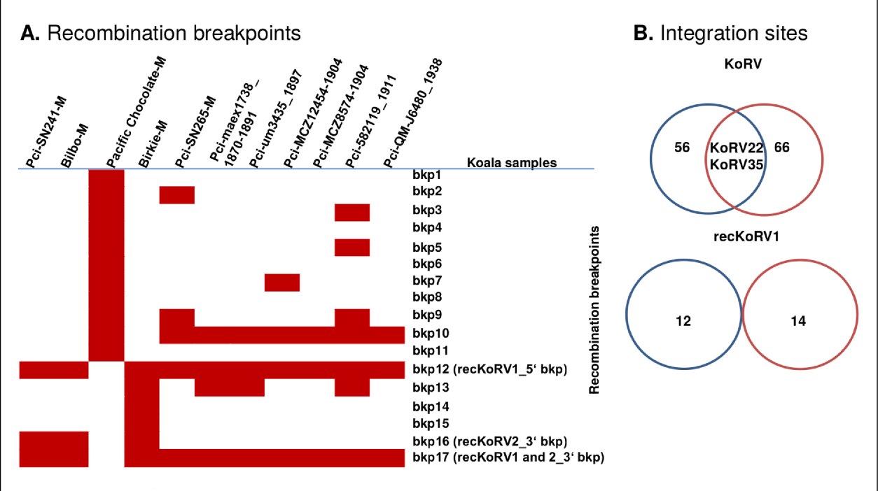 Development of Bioinformatic Tools for Retroviral Analysis from ...
