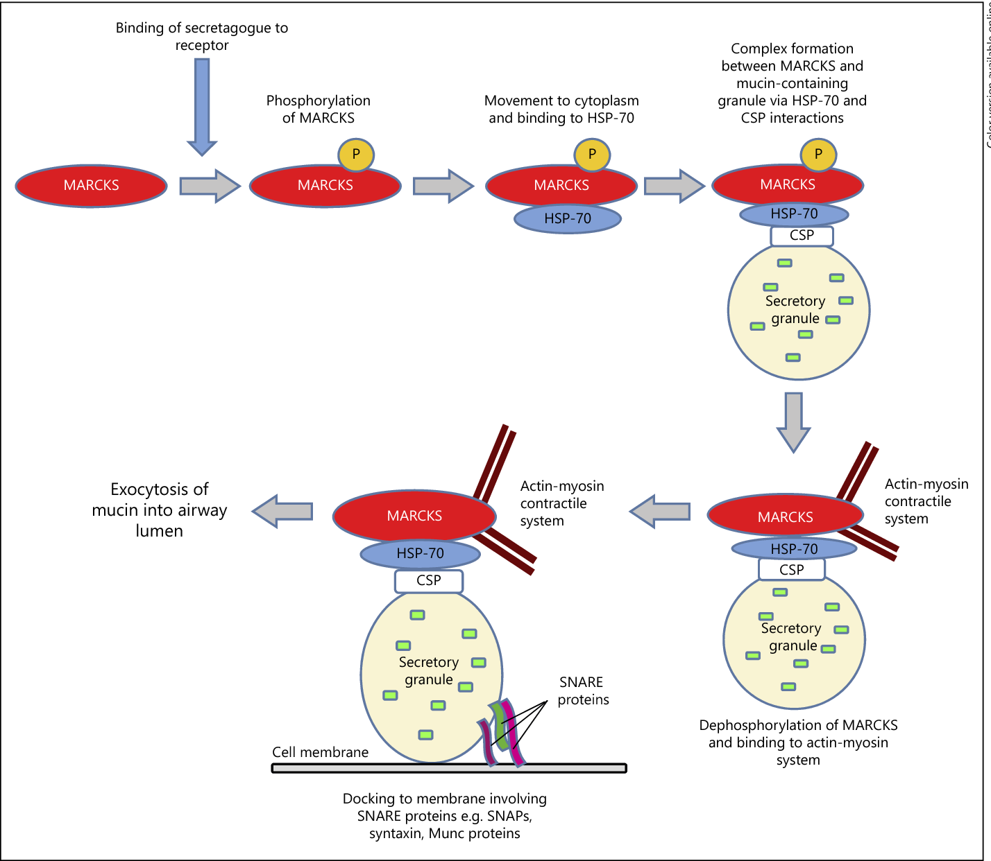 Figure 2 from Novel Therapies to Inhibit Mucus Synthesis and