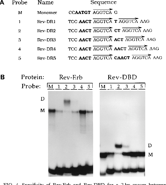 Figure 4 from direct repeat   represses transcription as a