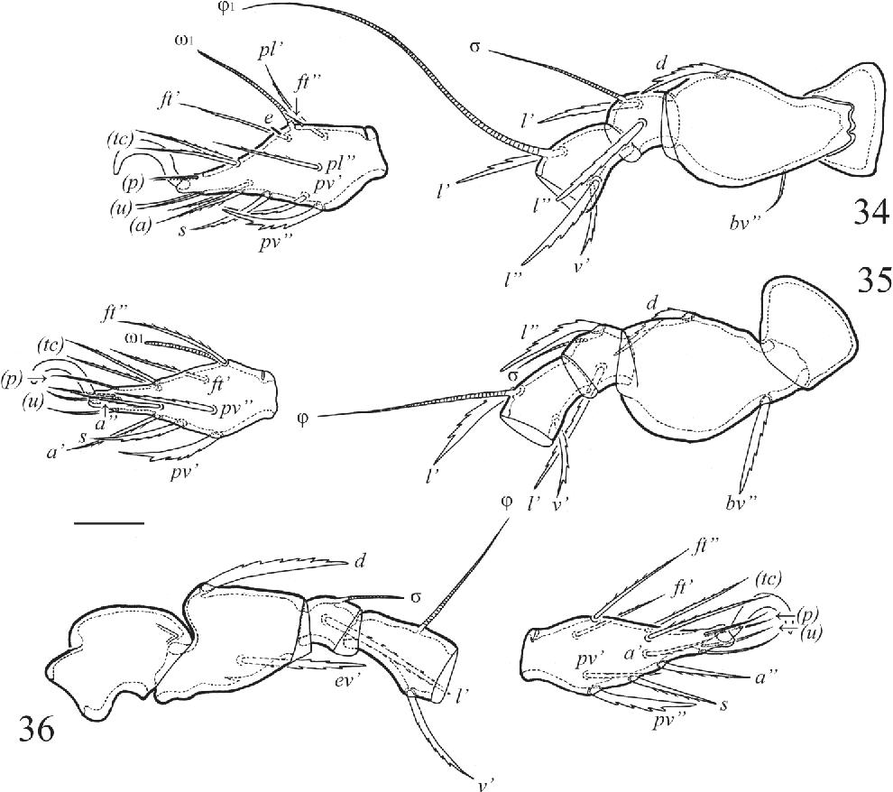 figure 34–36