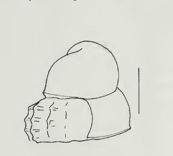 figure 86
