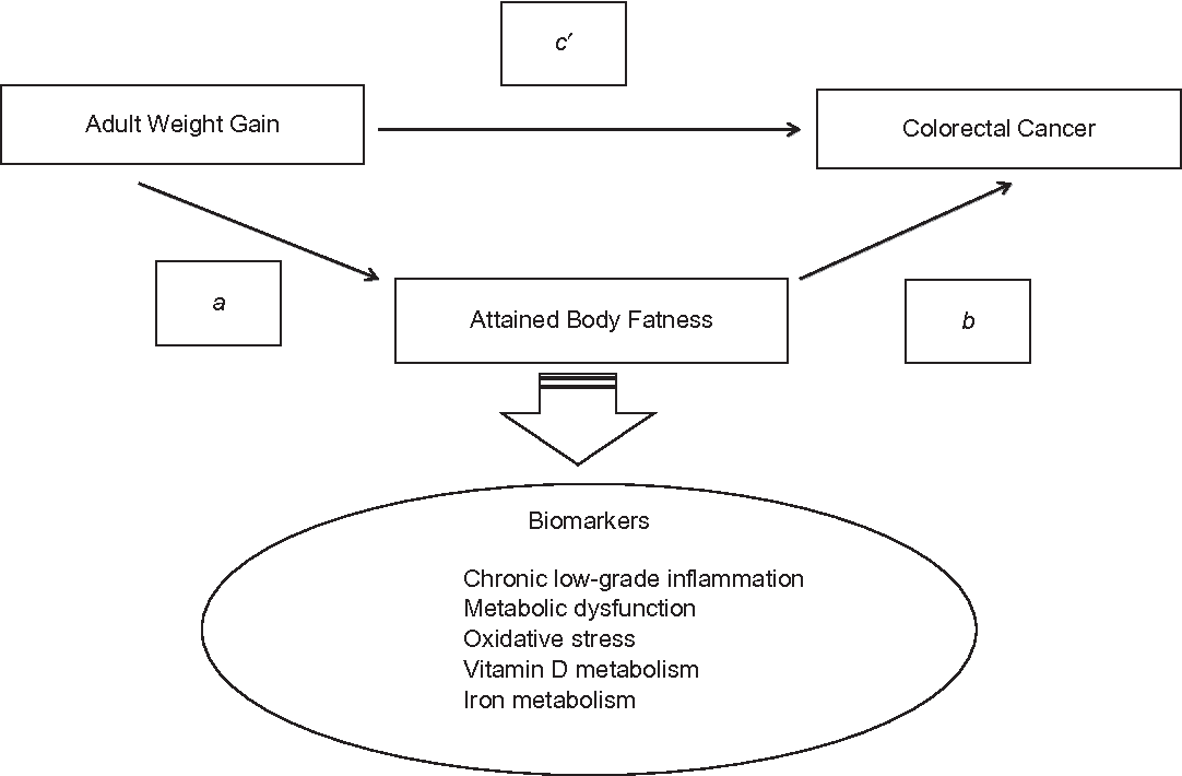 Pdf Metabolic Mediators Of The Association Between Adult Weight Gain And Colorectal Cancer Data From The European Prospective Investigation Into Cancer And Nutrition Epic Cohort Semantic Scholar