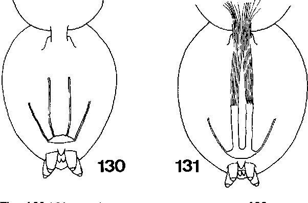 figure 129