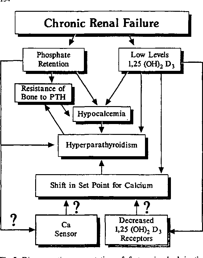 Figure 5 From Chronic Renal Failure Resistance Of Bone To Pth Shift In Set Point For Calcium Decreased Semantic Scholar