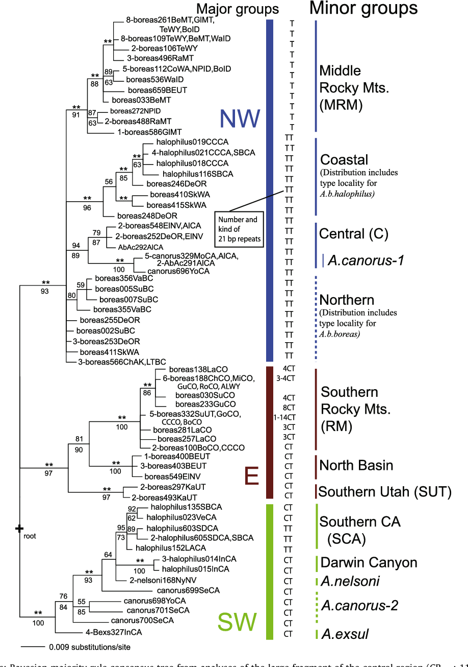 Figure 3 from Mitochondrial DNA evolution in the Anaxyrus