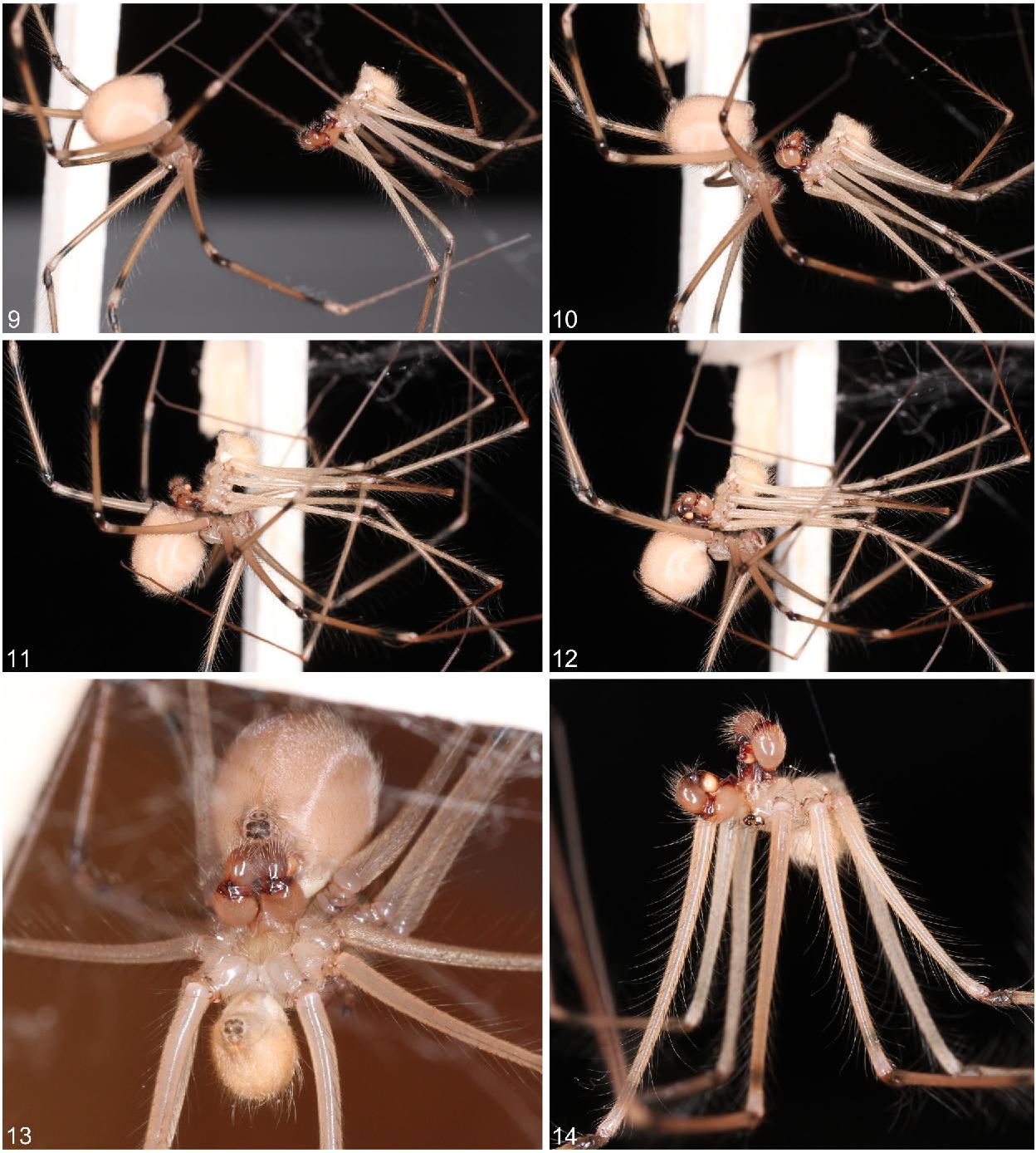 figure 9–14