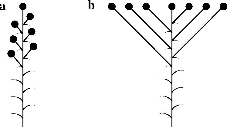 figure 3.7