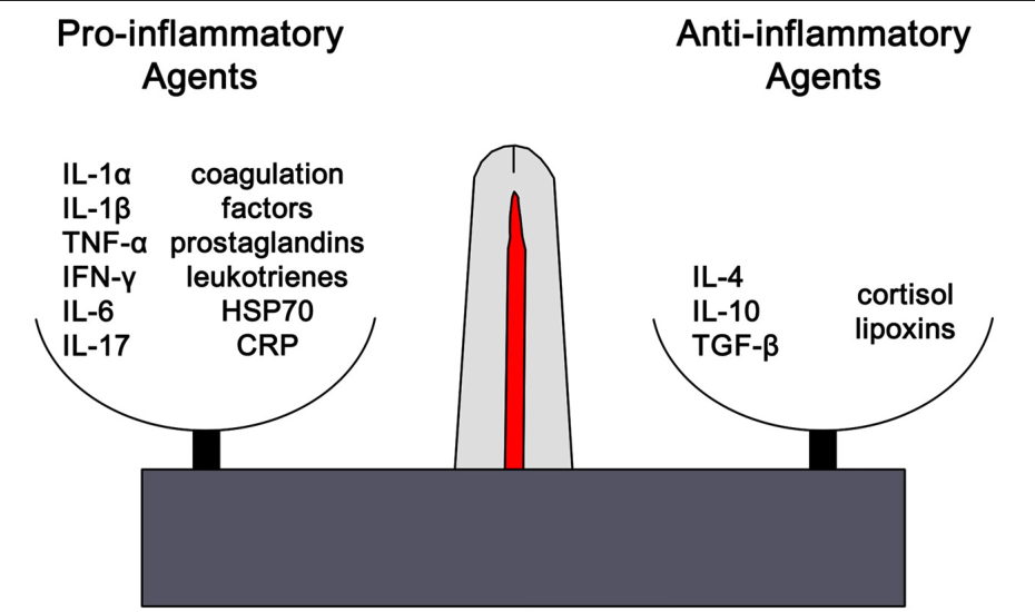 Figure 1 from Inflammation–Nature's Way to Efficiently