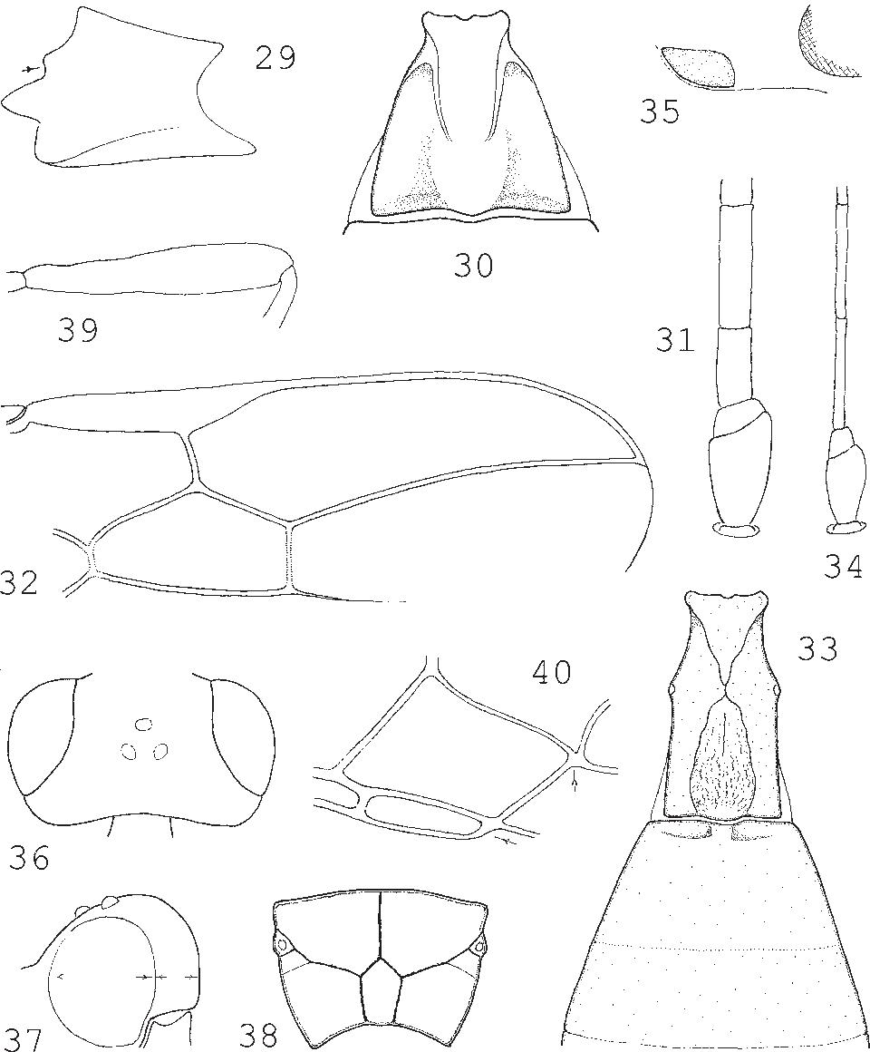 figure 29–40
