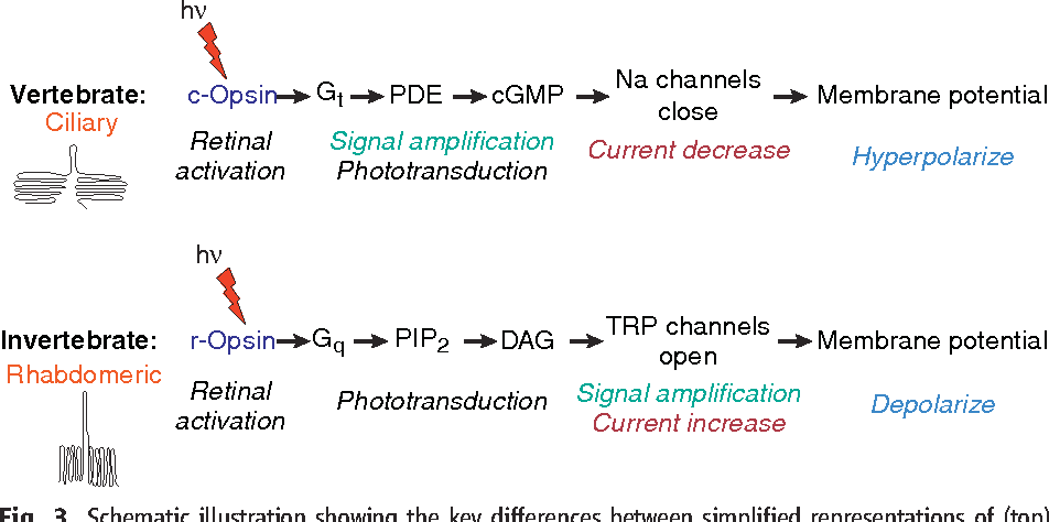 Figure 3 from Casting a genetic light on the evolution of