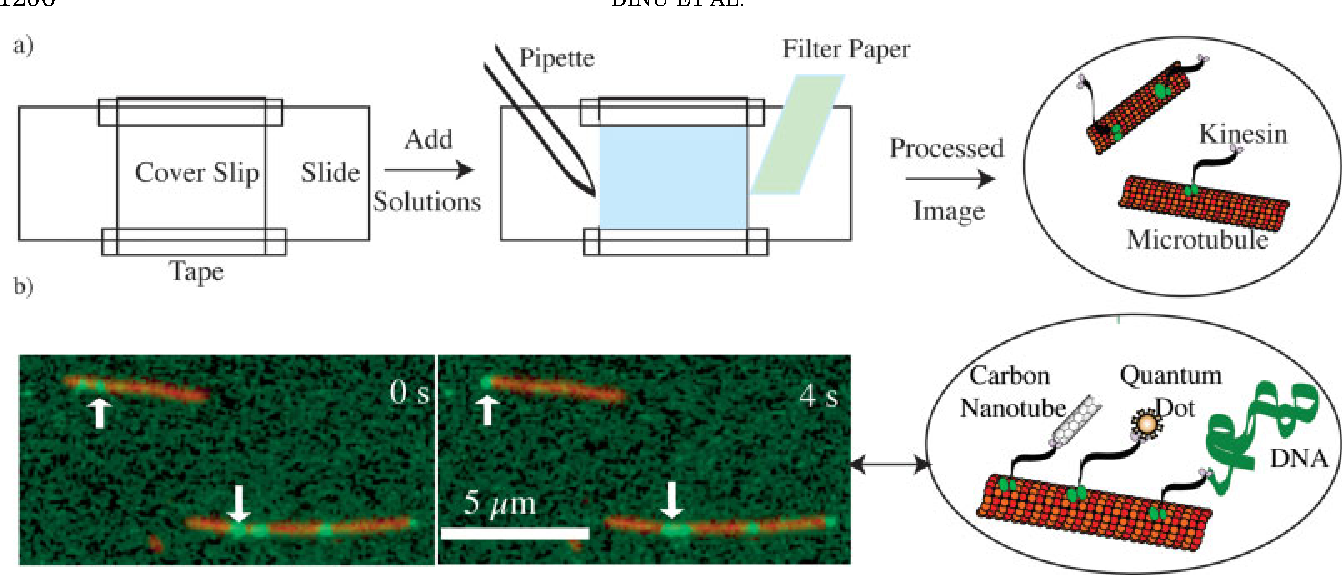 Figure 1 from Cellular motors for molecular manufacturing
