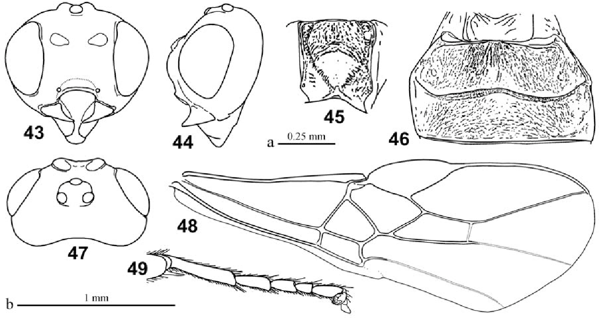 figure 43–49