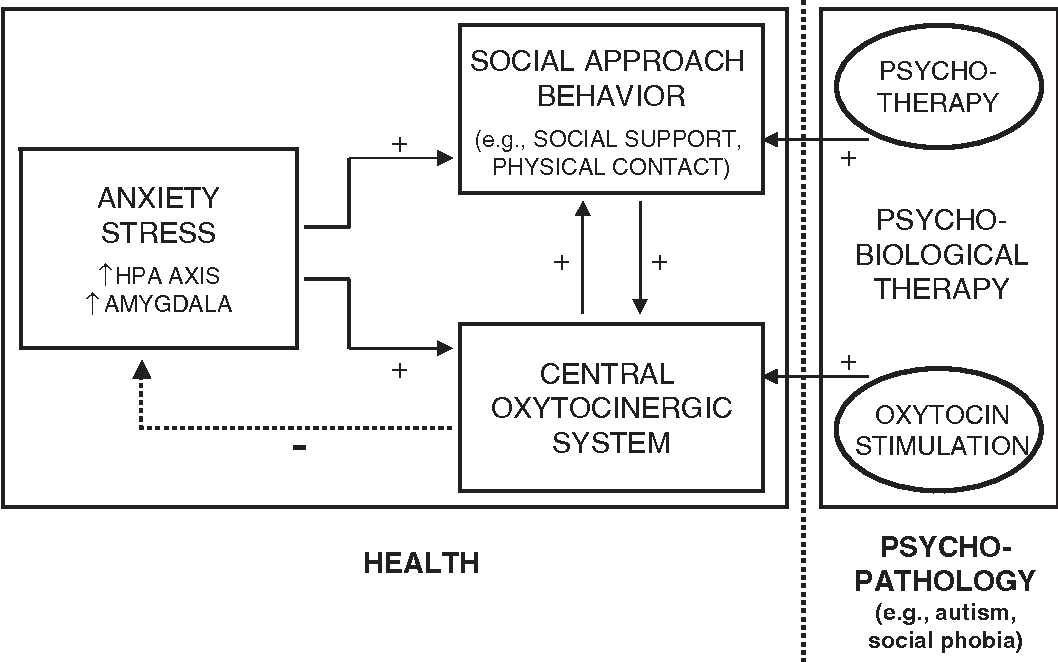 Oxytocin Found To Stimulate Social >> Figure 1 From Neuropeptides And Social Behaviour Effects Of
