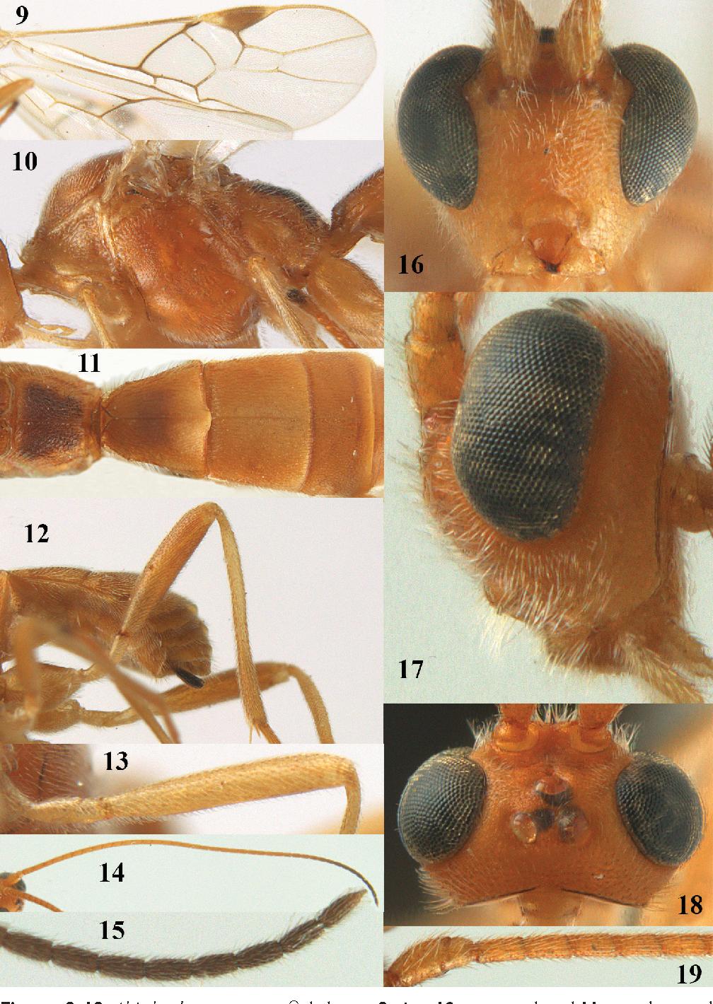 figure 9–19