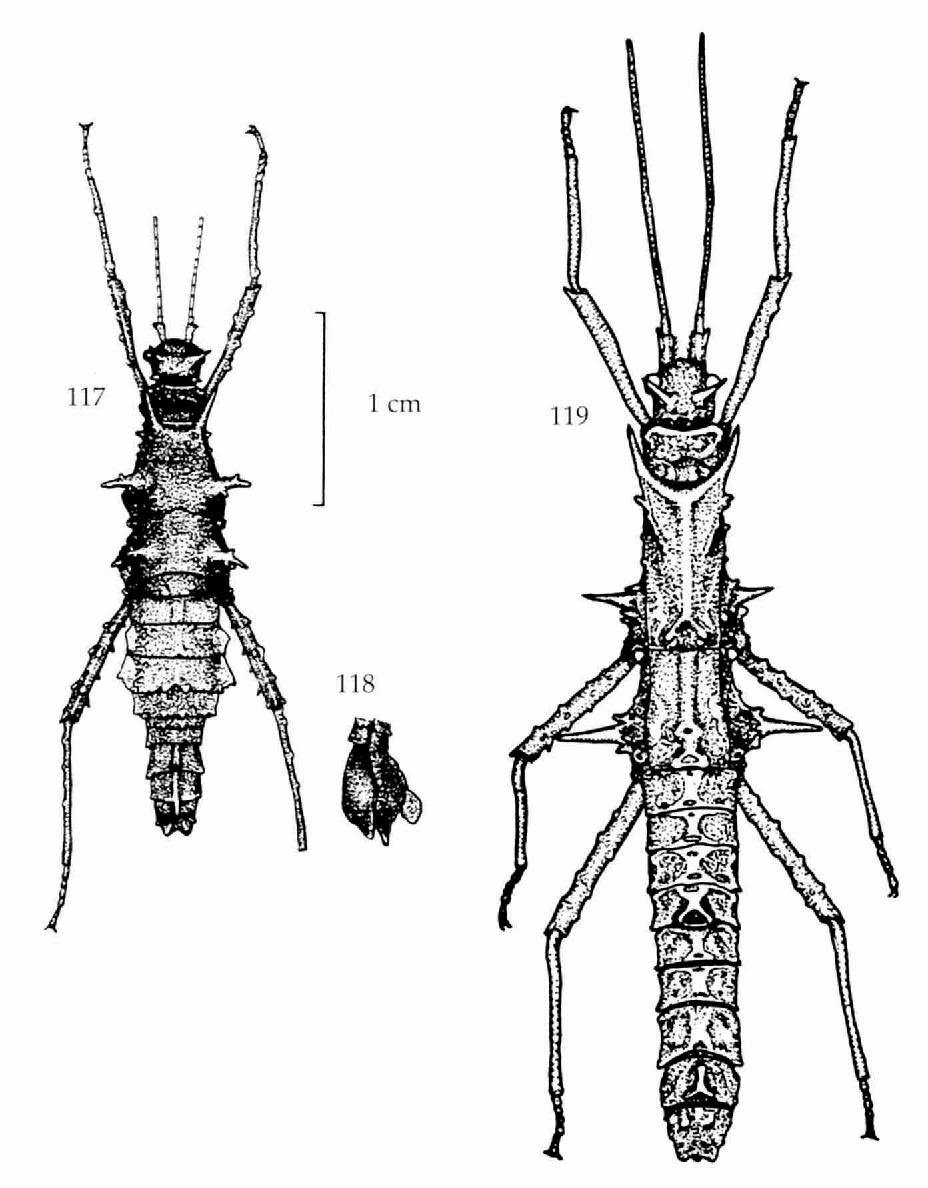 figure 117-119