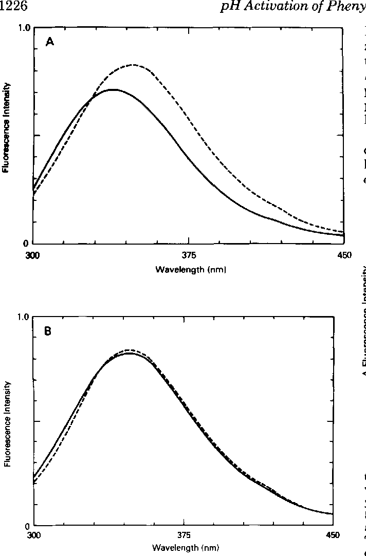 "FIG. 4. Effect of pH on the fluorescence spectrum of phen- contributions of buffer and phenylalanine to the observed fluoresylalanine hydroxylase in 50 mM BisTris propane and 150 mM cence. The difference fluorescence spectra illustrated were generated potassium chloride. A, comparison of the fluorescence of phenyl- by subtraction of the appropriate primary spectra as indicated. The alanine hydroxylase at pH 6.8 (-) and pH 9.5 (- - -). B, phenylal- dashed line is the difference between the spectrum of phenylalanine anine hydroxylase was diluted into 50 mM BisTris propane, 150 mM hydroxylase at pH 7.0 in the presence or absence of phenylalanine. potassium chloride (pH 9.5) (-). Phenylalanine was then added to The solid line is the difference between the spectrum of phenylalanine a final concentration of 1 mM (---). These spectra were obtained on hydroxylase at pH 9.5 in the absence of phenylalanine and that of the Spex Fluorolog spectrometer as described under ""Materials and the enzyme at pH 7.0 in the absence of phenylalanine. The fluoresMethods."" The fluorescence intensity is in arbitrary units. cence intensity is in arbitrary units."