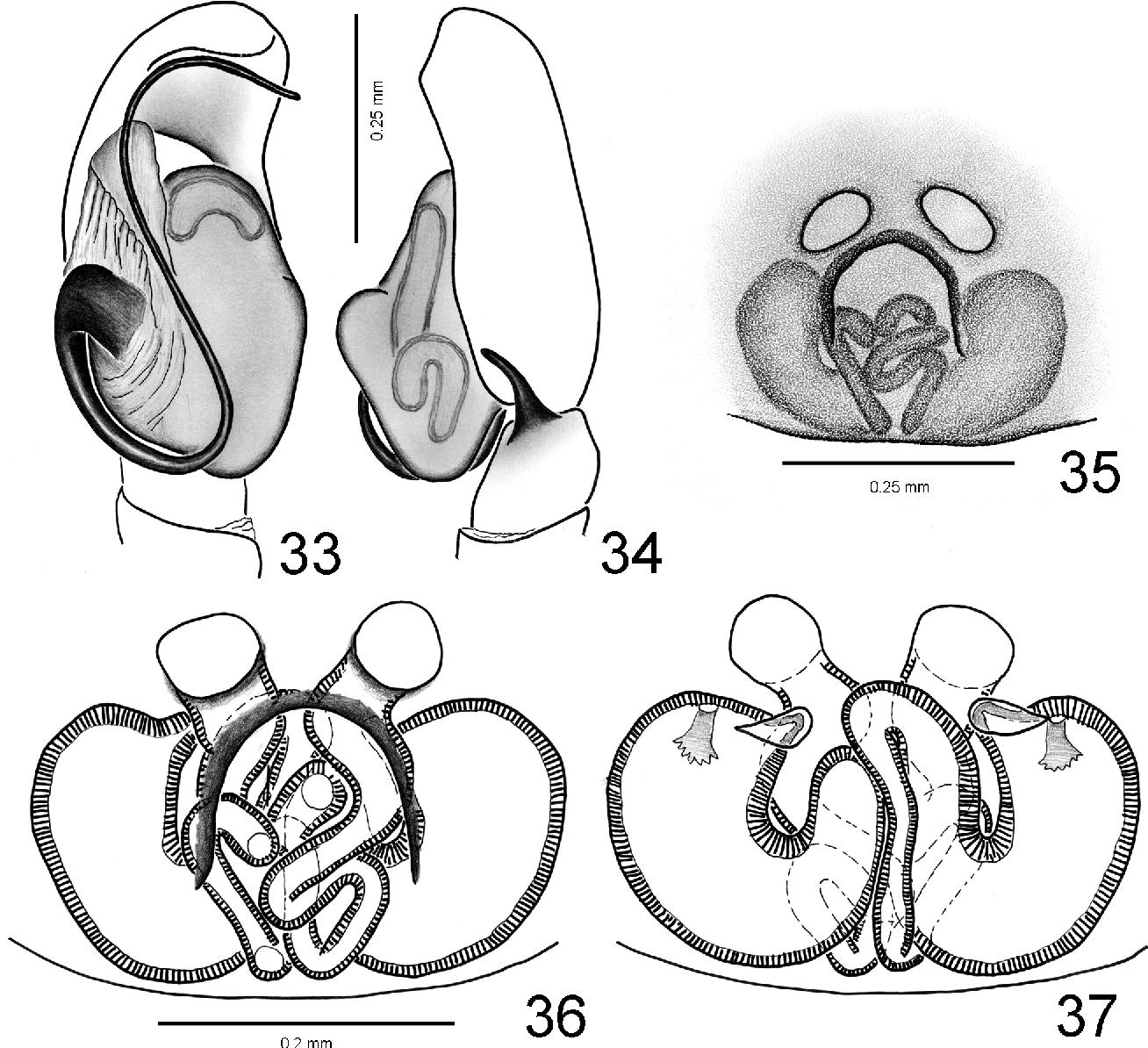 figure 29‒37