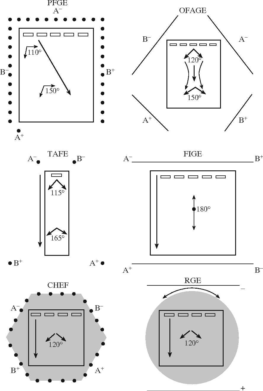 Pulsed Field Gel Electrophoresis Theory Instruments And