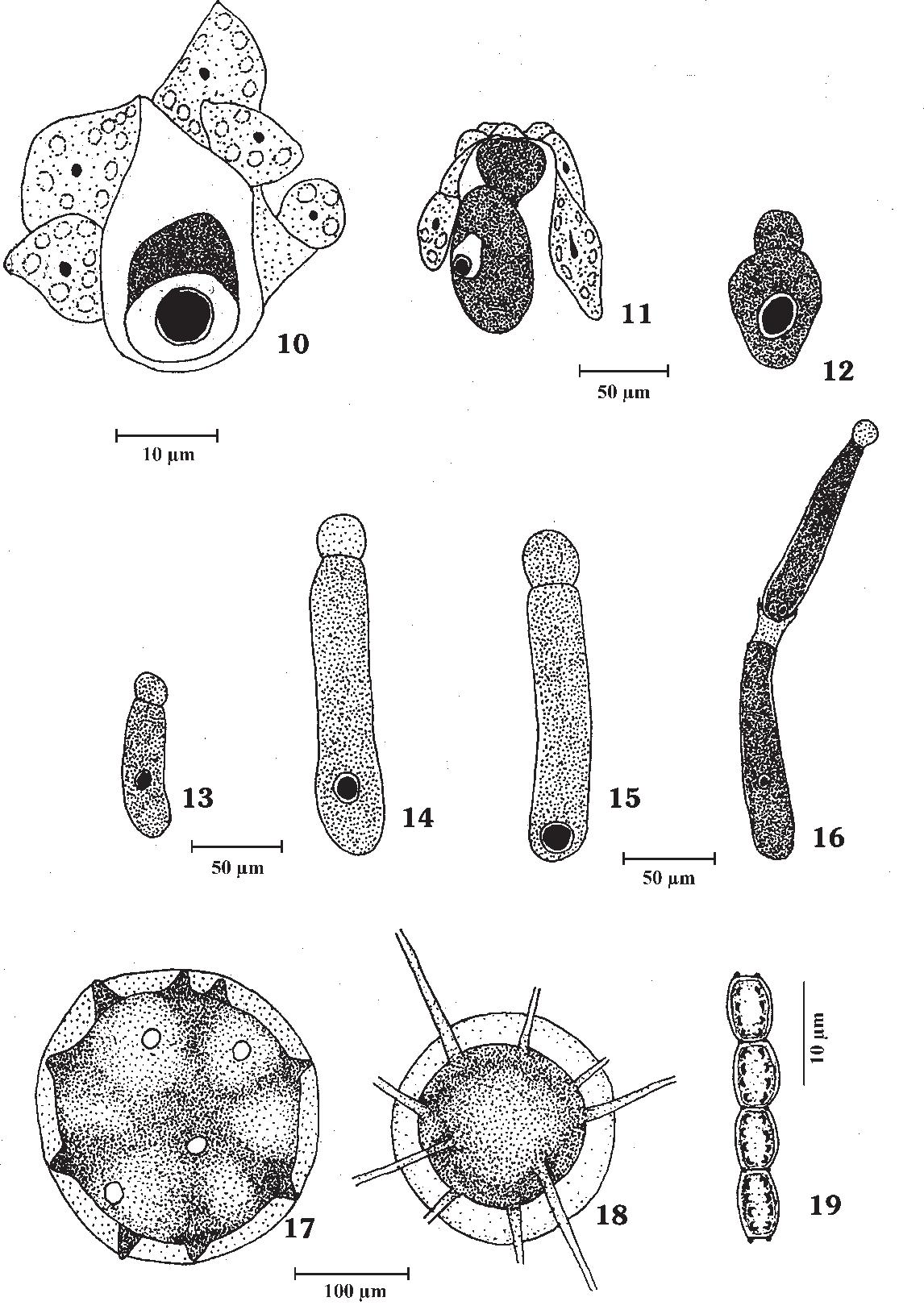 figure 10–19