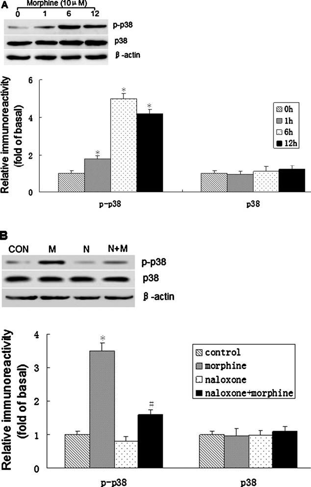 Figure 3 from Effect of c-Jun N-terminal kinase (JNK)/p38
