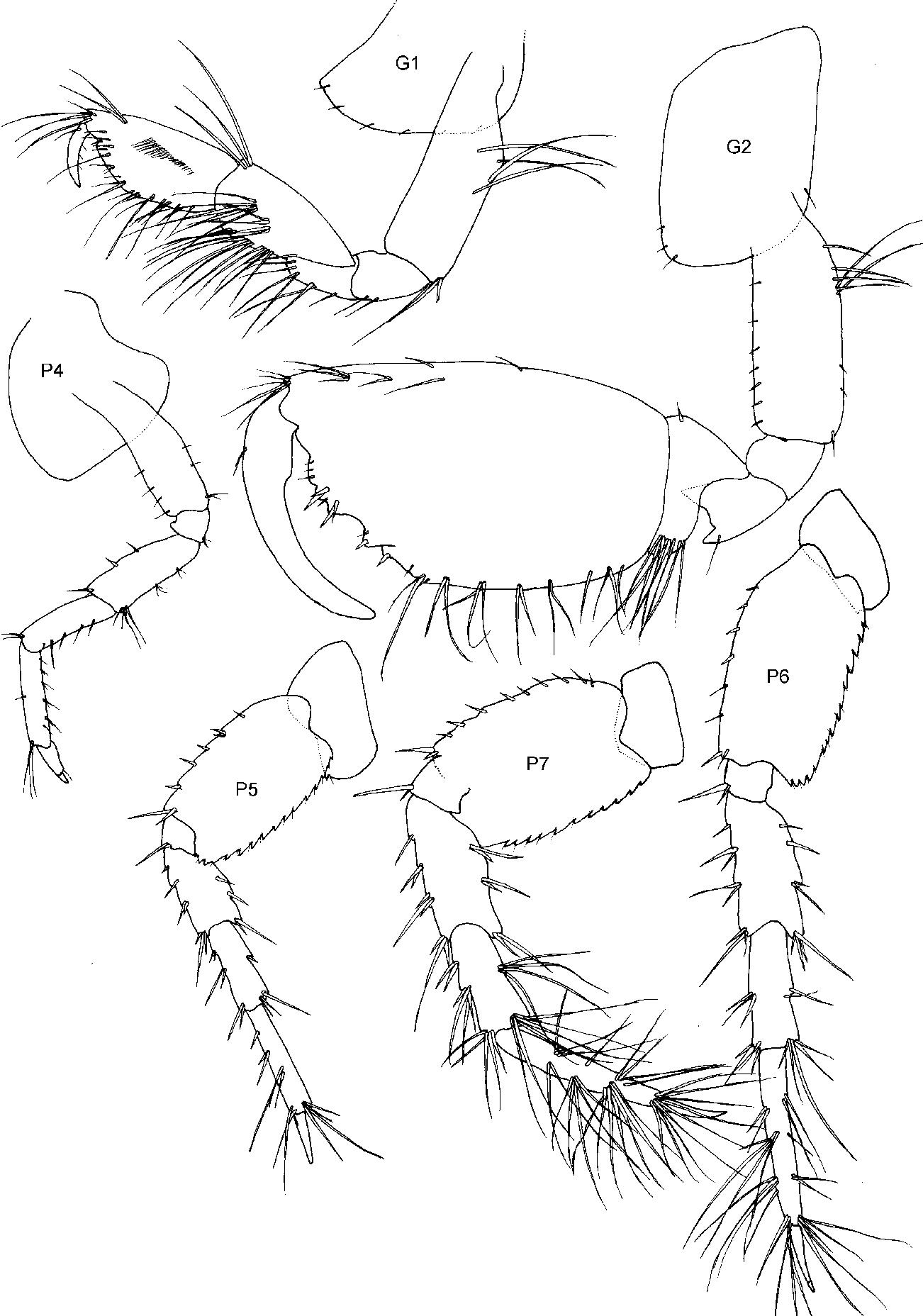 figure 30