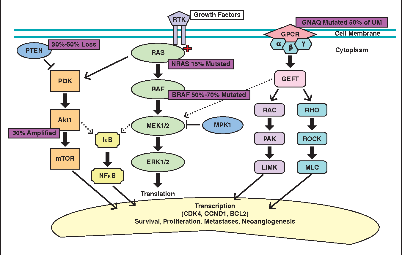 Map2k1 Pathway.Figure 1 From Melanoma Mutagenesis And Aberrant Cell Signaling