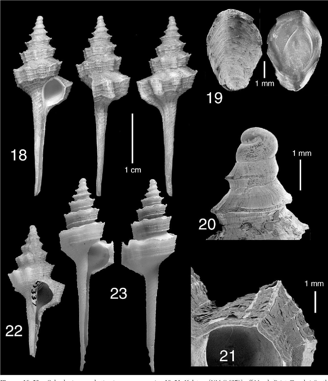 figure 18–23