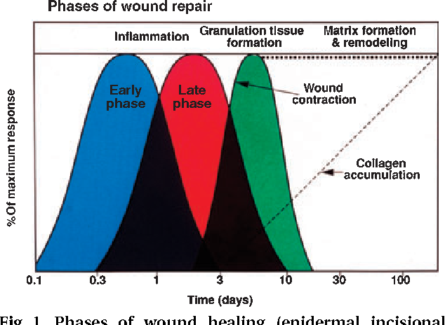 Biology and principles of periodontal wound healing