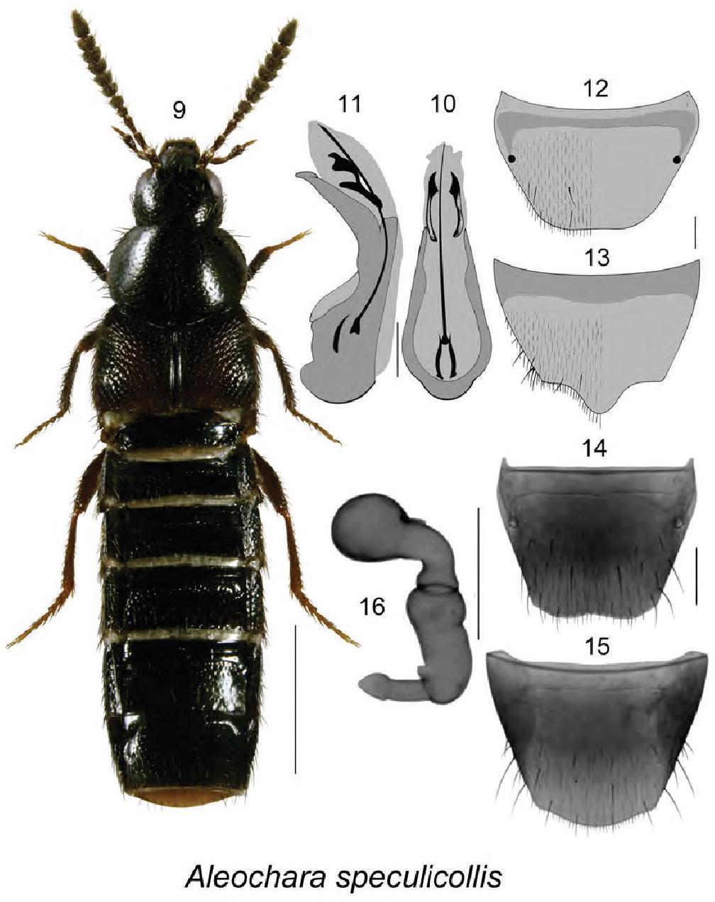 figure 9–16